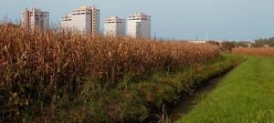 Consumo suolo agricolo