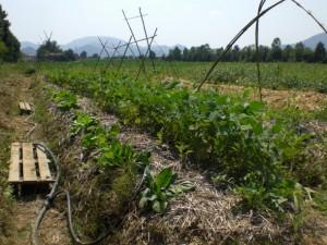 Decrescita felice e agricoltura sinergica: idee per una Padova diversa