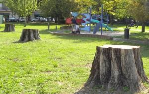 padova_taglio_alberi_gelsi