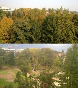 parco IOV taglio alberi
