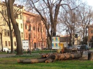 tagli alberi_tigli_piazza castello_padova