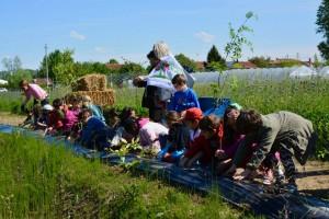 basso isonzo_un seme per il parco_pinatumazioni scuole