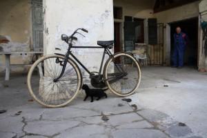 caminFacendo_bici