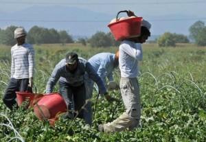 agricoltura_immigrati_caporalato